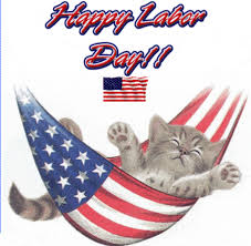 cat in US flag labor day