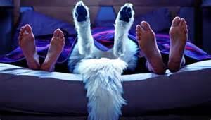 Dog between couple showing feet