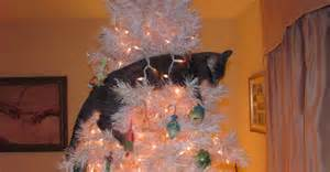 cat black laying in white tree
