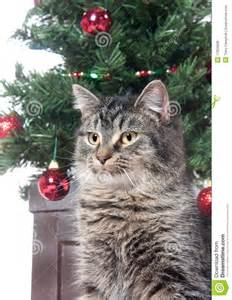 Cat by tree in statue pose