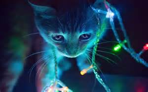 cat in dark with string of lights