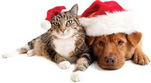 Cat n dog with santa hats