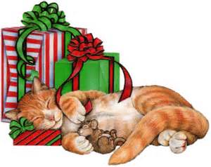 cat sleeping with presents
