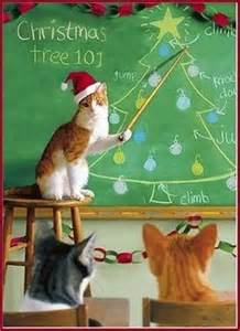 cat teaching trees