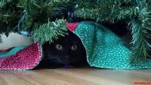 cat under blanket under tree