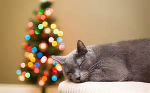 Cats in Christmas trees blue russian