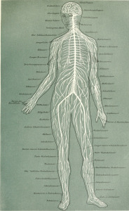 The wired human body