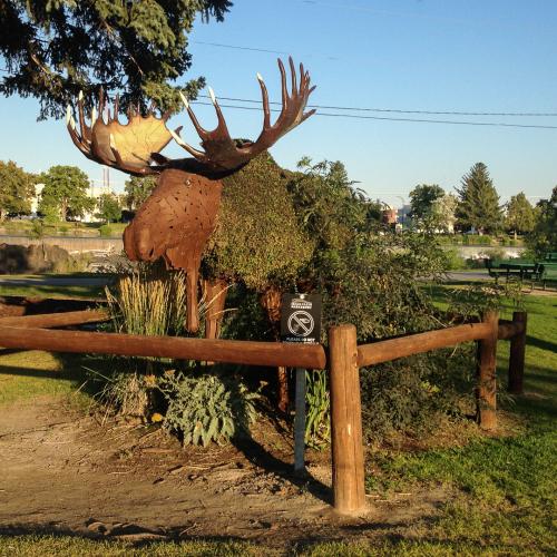 lindas-moose